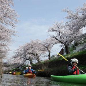 2017桜の花見カヌーIN鳥取市袋川